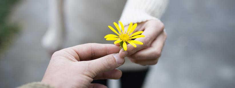 Hender som holder en blomst sammen
